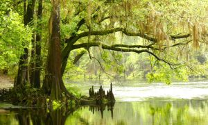 Florida's Babcock Wilderness, Where Man and Nature Live in Harmony