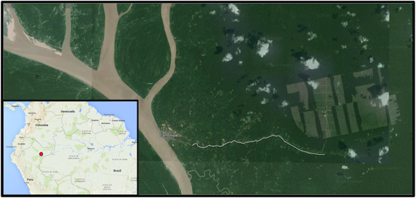 Google Earth satellite imagery captured in 2015 shows the extent of the clearing. The site is about 3.5 miles long and 2 miles wide (5.6-by-3.2 kilometers). Tamshiyacu is the closest town.
