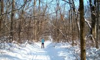 Chicagoland Cross-Country Skiing Destination