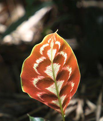 The incredible diversity of rainforest flora. Photo by Mongabay.com / Rhett A. Butler