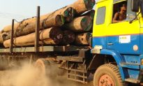 Illegal Logging in Burma: 155 Chinese Nationals Arrested