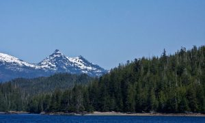 Scientists Call on Obama to Stop Logging Old Growth Forests