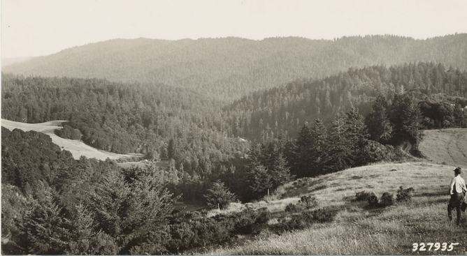 n the 1920s and 1930s crews surveyed much of California, collecting information about vegetation. This photo was taken in 1936 by Albert Wieslander. (Marian Koshland Biosciences Library)
