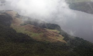 Deforestation May Be Ramping Up in Papua, West Papua