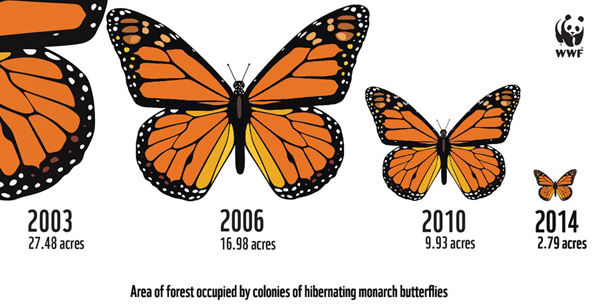 The shrinking of the migrating monarch butterfly population. Image by: WWF.