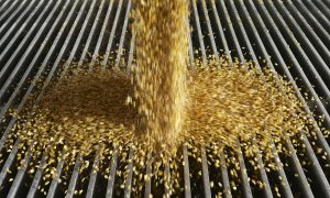 Report Rejects Ethanol for Fuel