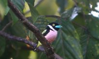 Burma's Bird Species Count Jumps to 1114