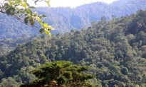 Sumatran Community Taking Charge of Forest Protection