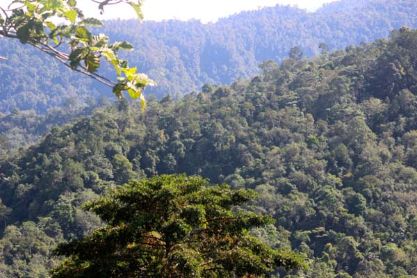 The forests of the Bukit Barisan mountains support high levels of biodiversity, prevent landslides, and protect local watersheds. Photo by Sapariah Saturi.