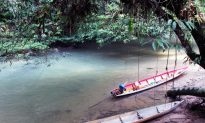 Indonesia Community Regains Forest Rights