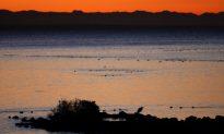 Visiting Elkhorn Slough – The Hidden Gem of California's Central Coast