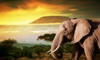 5 Must-See Kenya Safari Spots