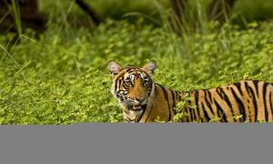 Rajasthan's Awesome Ranthambore National Park