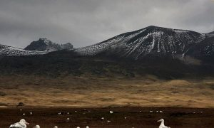 Ocean Pollutants Threaten Survival of Wandering Albatross