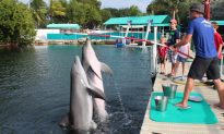 Did You Ever Swim With a Dolphin?
