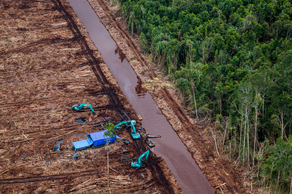 Excavators beside a canal cutting through recently deforested peatland. © Ulet Ifansasti / Greenpeace