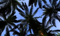 Palm Oil Major Makes Deforestation-Free Commitment