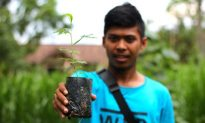 Local Community in Sumatra Protect Forest Timber