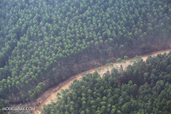 Arara Abadi acacia plantation near Pekanbaru, Riau, Sumatra. All photos by Rhett A. Butler.