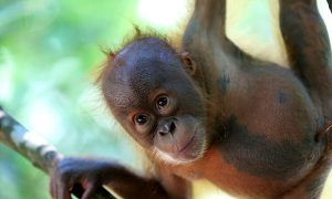 Is a Pulp Mill in Sumatra Denying Community Forest Rights?