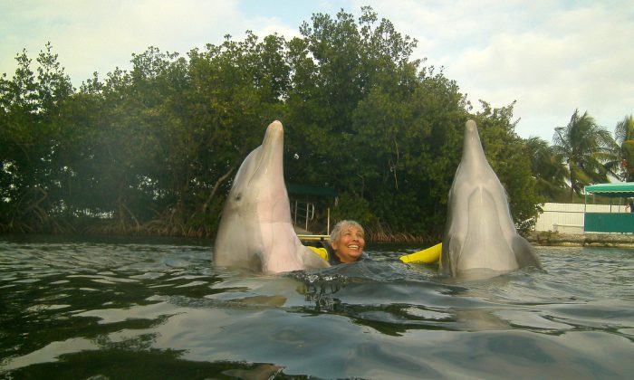 Dolphins interacting with guest at Dolphins Plus. (John Christopher Fine copyright 2015)