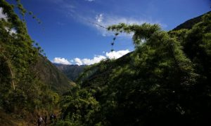 2k Hectares of Forest Destroyed by Cacao Company in Peru