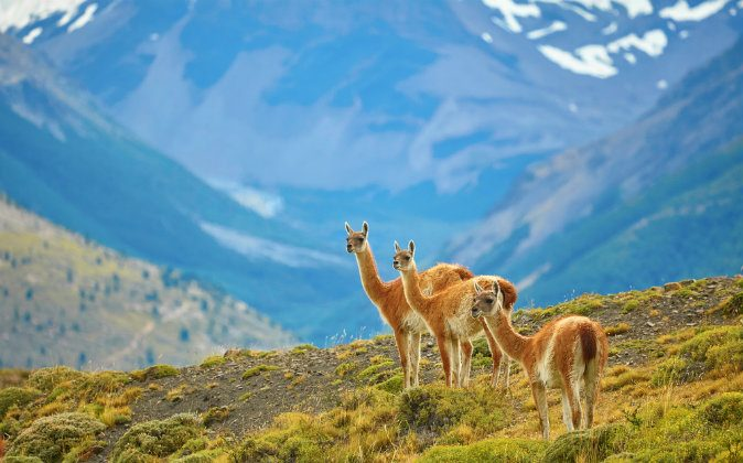 Torres del Paine national park, Patagonia, Chile via Shutterstock*