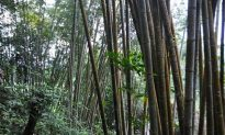 Sulawesi Communities Sustainably Managing Forests