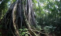 Indonesia Dissolves Agency Charged With Forestry Reform