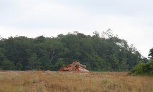 Selective Logging Changes to Forest Structure Over Time