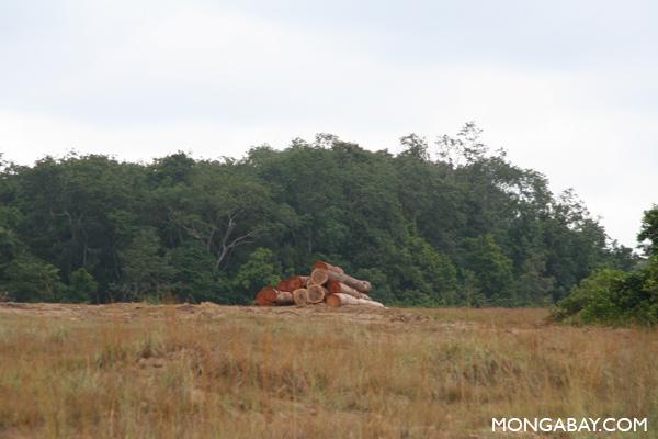 Logging in Gabon. Photos by Rhet A. Butler