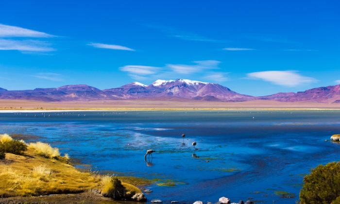 Atacama Desert with Flamingos, Chile via Shutterstock*