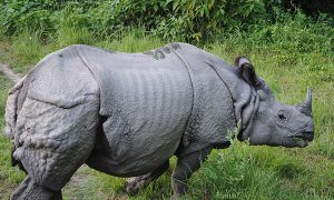 Kingpin Responsible for Killing 20 Rhinos Caught by Authorities