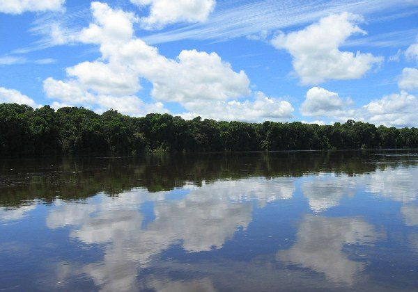 Forest in Guyana. Photo by Tiffany Roufs.