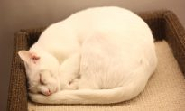 New York City Cat Café Finds Forever Homes for Cats