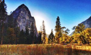 Inside Yosemite National Park