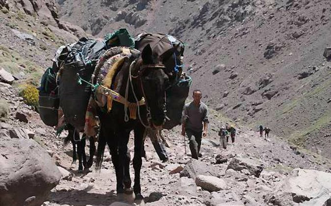 It's possible rent a mule and it's muleteer to carry your stuff during the trek (Photo: Natalia Belzarova)