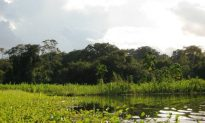 Researchers Propose Improvements for Peru's Protected Areas