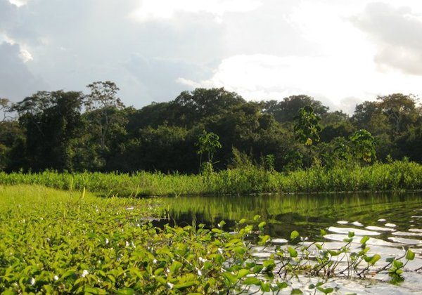 The study found Peru's rainforest areas tended to be better protected than its coastal and Andean regions. Photo taken in the Amazon rainforest near Iquitos, Peru, by Morgan Erickson-Davis.