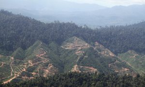 Malaysian Palm Oil Company at Risk from Poor Sustainability