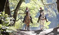 3 Stunning Horse Riding Locations