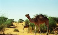 Best Time to Visit Mauritania