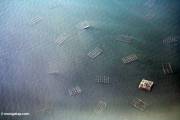 Wooden fishing rigs off the coast of Java. Photo by Rhett A. Butler.