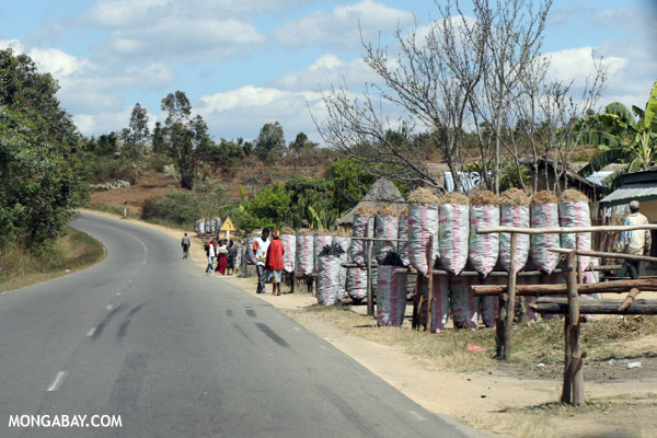 Charcoal production is rife in many parts of Africa. Here, charcoal is sold along a road in Madagascar. Photo by Rhett A. Butler.