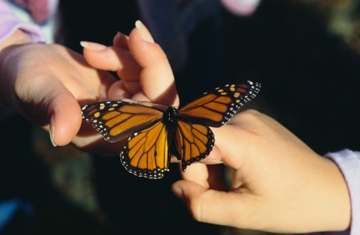 Cut Herbicides and Pesticides to Help Monarch Butterflies