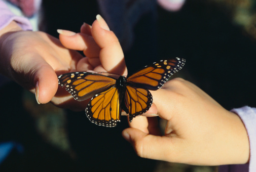 More thoughts on how monarch butterflies could use a helping hand (Fuse/Thinkstock)
