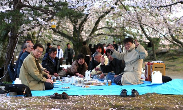 A hanami, flower-viewing party, under the cherry blossoms in Japan. (*Shutterstock)