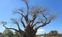 Deforestation Driven by Economic Hardship in Zimbabwe
