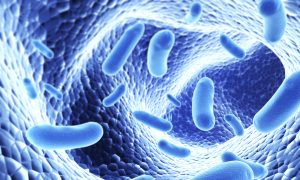 What Do Bacteria Living in Your Gut Have to Do With Your Immune System?