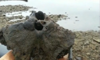 Fisherman Thinks he Hooked Woolly Mammoth Skull (Video)